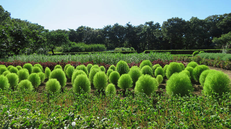 Farm garden in Boso no Mura, Narita. Old farm field of Boso no Mura in Narita, Japan royalty free stock image