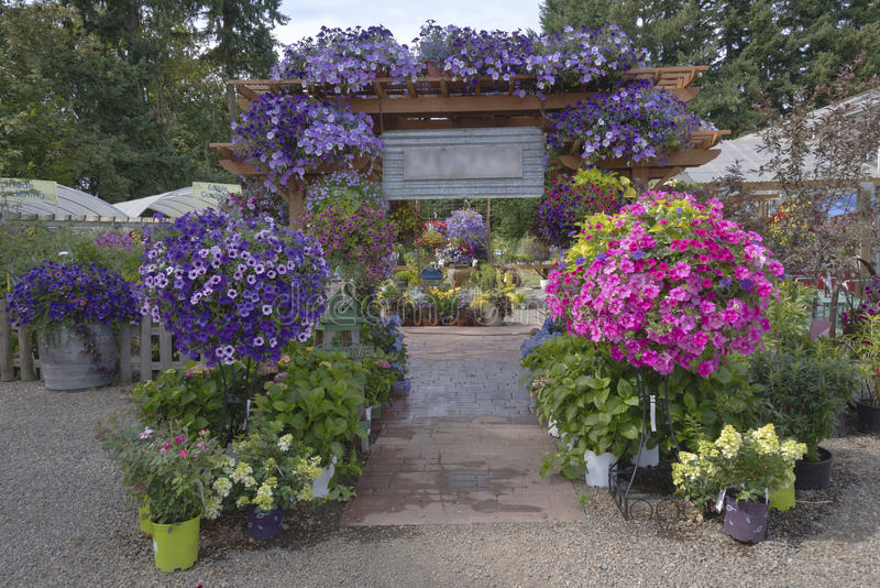 Farm and garden nursery in Canby Oregon. Display of Summer blooms in a farm and garden nursery Canby Oregon stock image