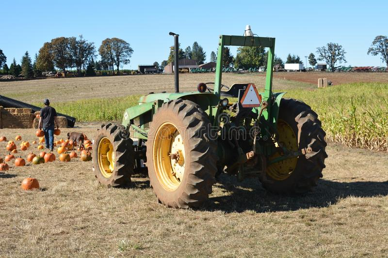 Farm hand unloads pumpkins from tractor near Salem, Oregon. A farm hand unloads pumpkins from a John Deere tractor on a farm east of Salem, Oregon royalty free stock image