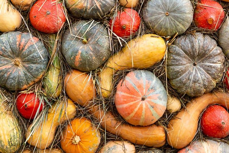 Farm harvest autumn vegetables green pumpkin orange long vertical pattern stock photography
