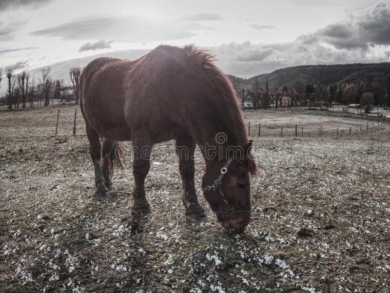 Farm horses on a muddy meadow. On a cloudy autumn day wet warm fur together temperature sweet standing spring sleepy sky shaking season rural rainy photograph royalty free stock images