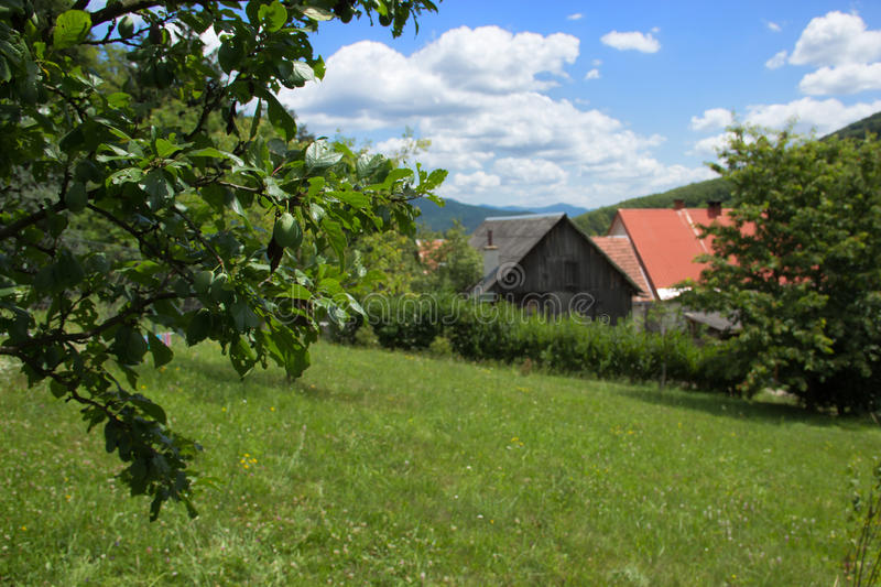 Farm House Yard. With Plum Tree royalty free stock photography