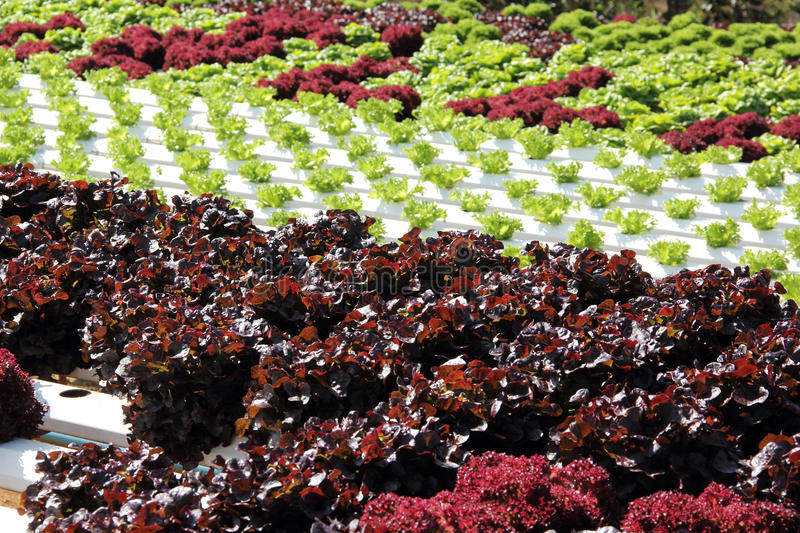 Farm of Hydroponic Plantation. In the noon royalty free stock photos