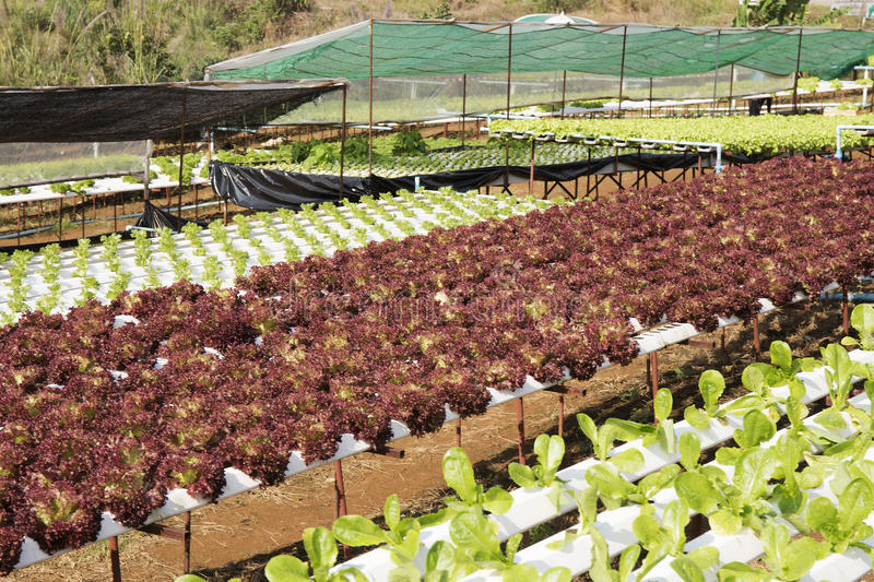 Farm of Hydroponic Plantation. On the noon stock photos