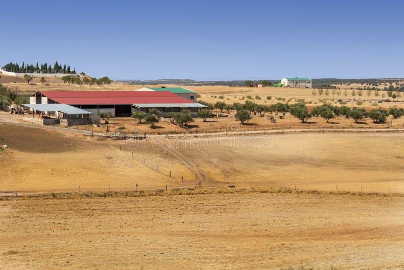 Download Farm of Jaen stock image. Image of spanish, europe, quiet - 33464077
