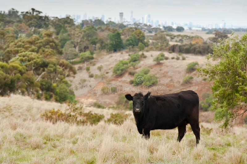 Farm land on the urban fringe in Australia. With city skyline in the background stock image