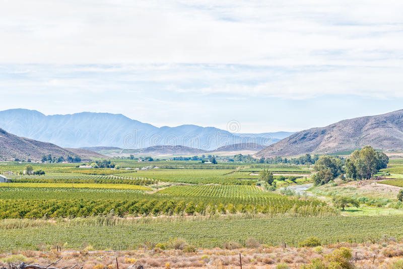 Farm landscape near Bonnievale. A farm landscape with vineyards and orchards near Bonnievale in the Western Cape Province stock photos