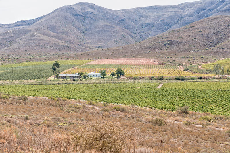 Farm landscape near Bonnievale. A farm landscape with vineyards and orchards near Bonnievale in the Western Cape Province stock photography