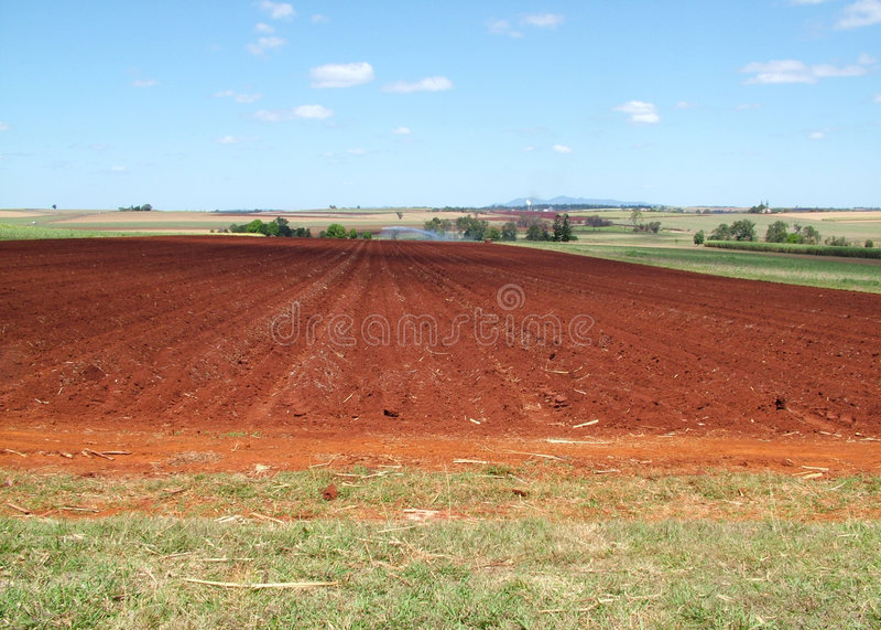 Farm life. A post harvest sugar cane farm on volcanic soils stock images
