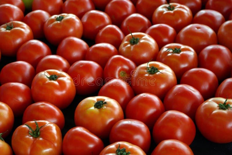 Farm Market Tomatoes, Little Rock Farmer's Market, April 25, 2009 stock image