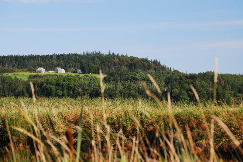 Farm In Nova Scotia, Canada. A farm and barns look out over cattails and woods from a hill near Antigonish, Nova Scotia. The photo is a medley of green, yellow royalty free stock image