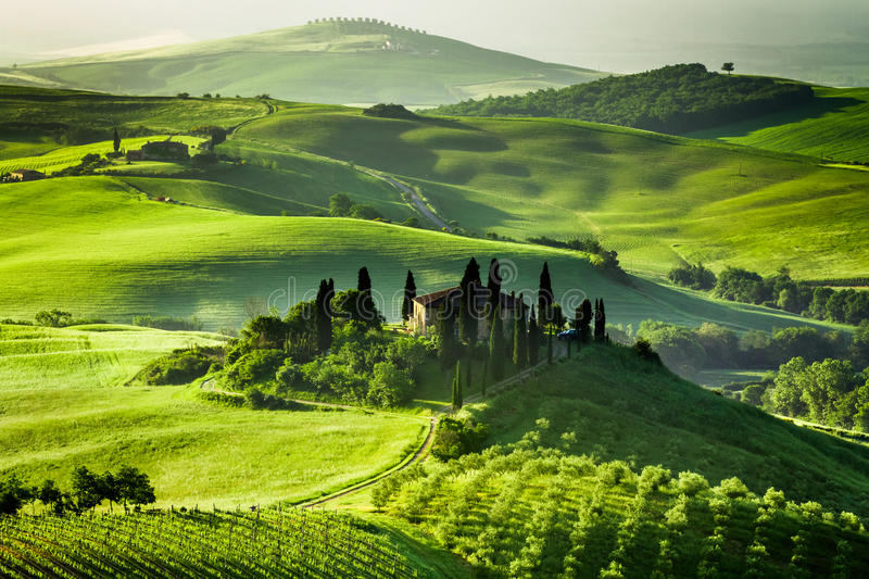 Farm of olive groves and vineyards stock image