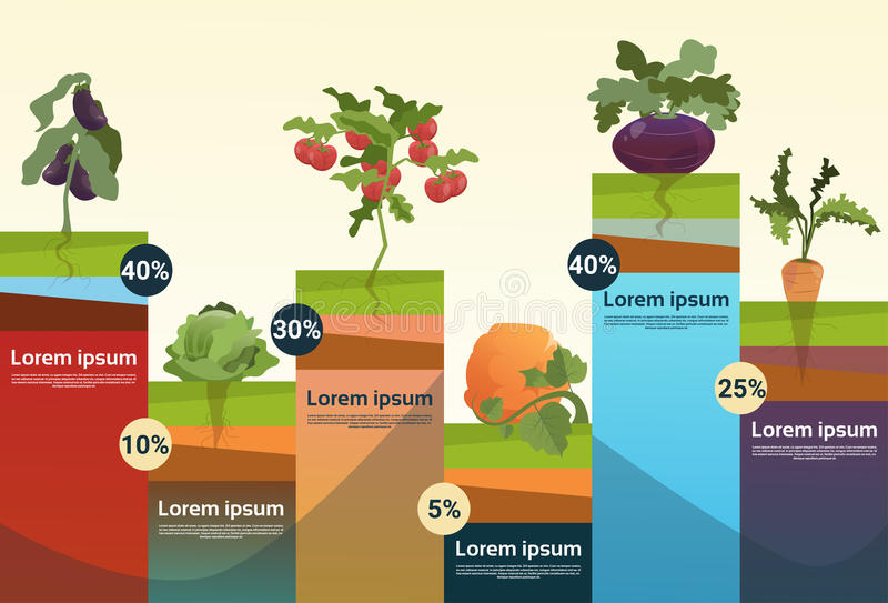 Farm Organic Eco Vegetables Grocery Infographic royalty free illustration
