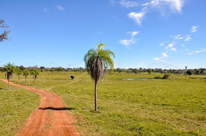 Farm in Pantanal, Mato Grosso (Brazil). Farm in Pantanal, Mato Grosso do Sul (Brazil stock image