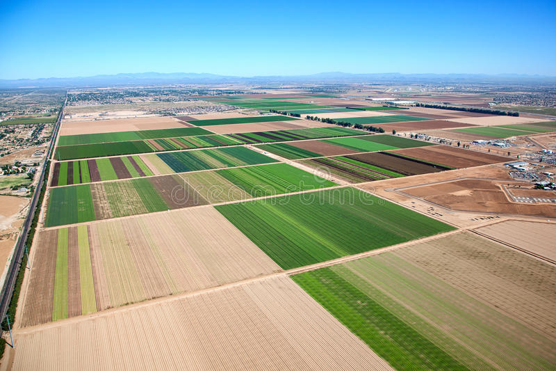 Farm Phoenix stock image
