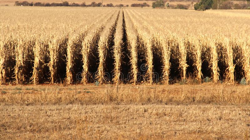 Farm in Potchefstroom, South Africa stock images