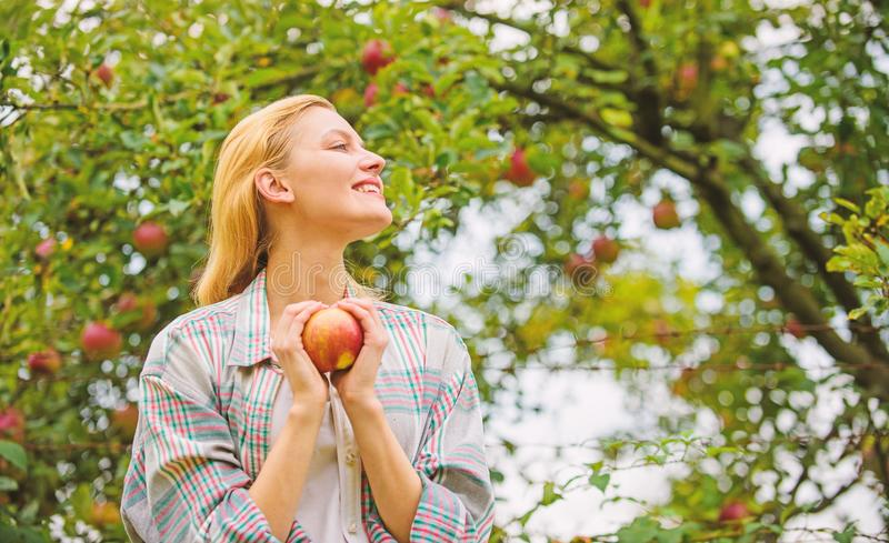 Farm produce organic natural product. Girl rustic style gather harvest garden autumn day. Farmer pretty blonde with. Appetite red apple. Harvesting season royalty free stock image
