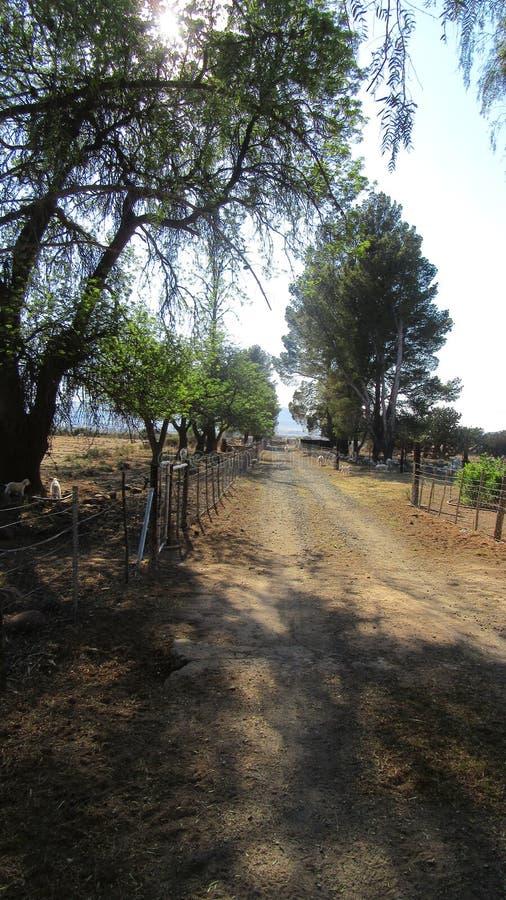 Farm road. Merino Sheep Farm in the Karoo SouthAfrica stock image