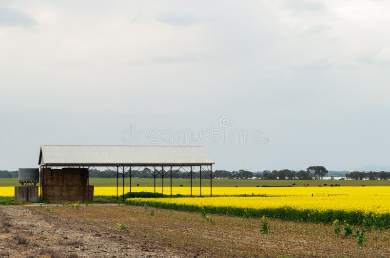 Farm shed near Ballarat, Australia. A farm shed in a yellow canola field, near Ballarat, Australia royalty free stock photo