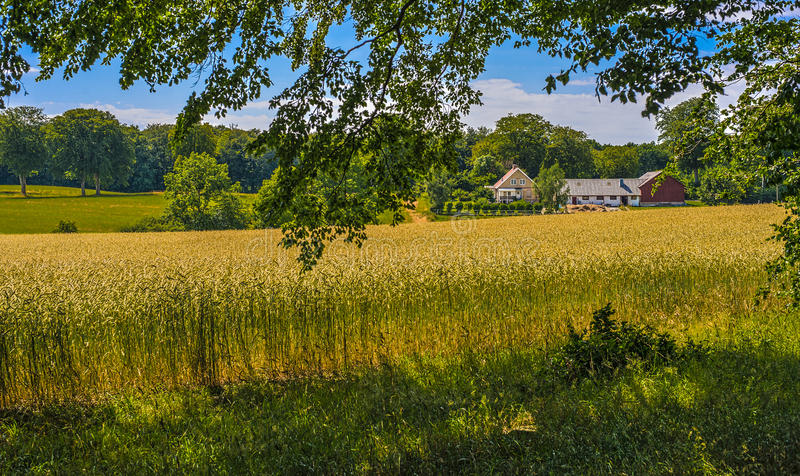 Farm. Small, picturesque farm with crops ready to be harvested stock photo