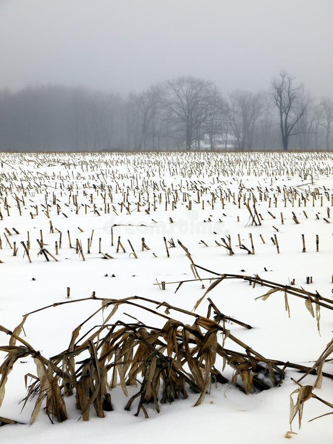 Farm: winter snow corn field stock photos