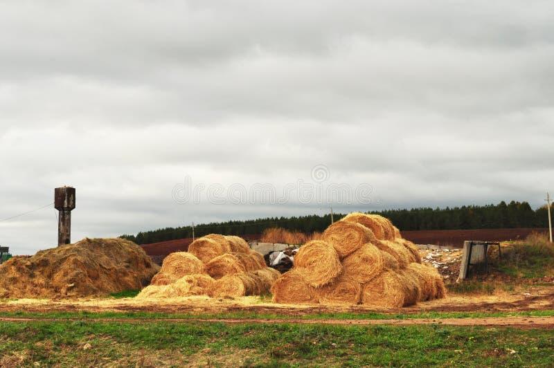 Farm, the stock of straw