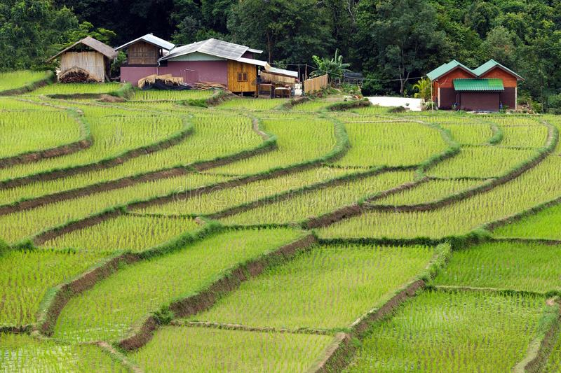 Farm And Terrace Rice Field Royalty Free Stock Photo