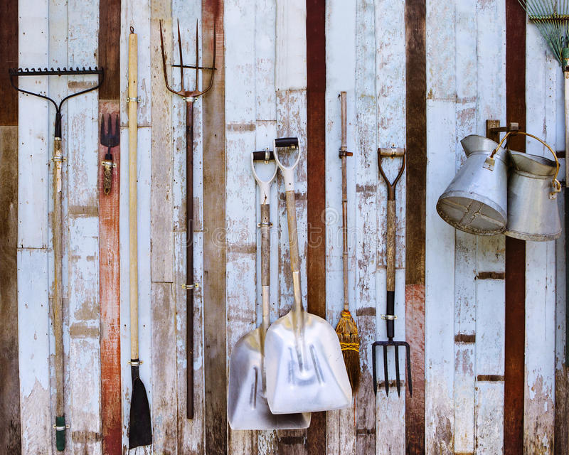 Farm tool pitchfork and two shovels against old wooden wall use stock photo