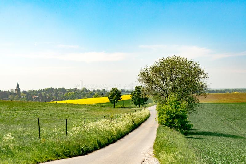 Path between yellow field and blooming meadows royalty free stock photo