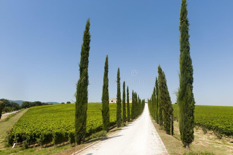 Farm In Umbria Stock Image