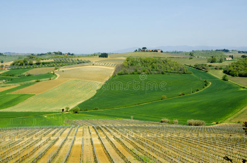 Farm with Vineyards and Fields in Tuscany, Italy stock image