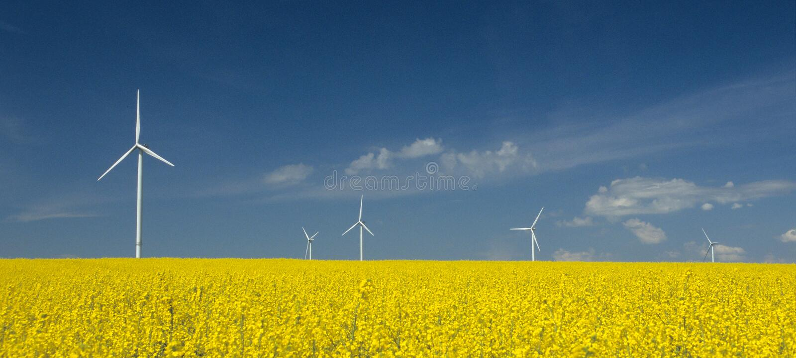Download Farm Of Windturbines Close To Field Stock Photo - Image: 6088094