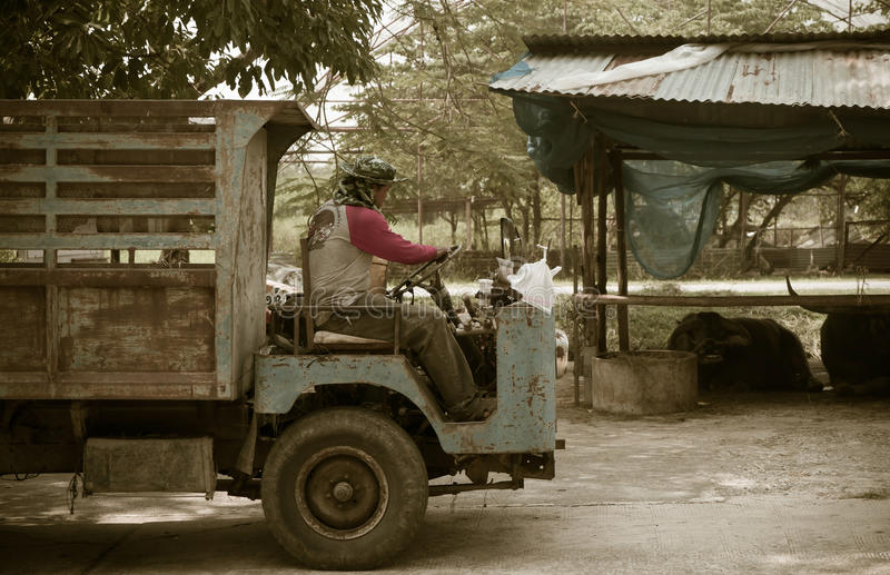 A farm worker is driving an old truck passing the Buffalo barn royalty free stock photography
