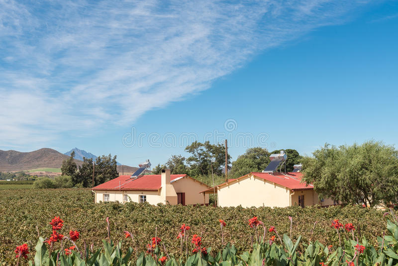 Farm worker houses with solar geysers between vineyards near Bonnievale. BONNIEVALE, SOUTH AFRICA - MARCH 26, 2017: Farm worker houses with solar geysers between stock photography