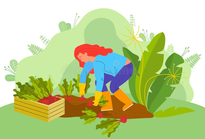 Farming Woman with Beetroots Farmer on Farm Vector. Farm worker vector, woman working on plantation. Picking vegetables, lady with beetroots, farmer surrounded vector illustration
