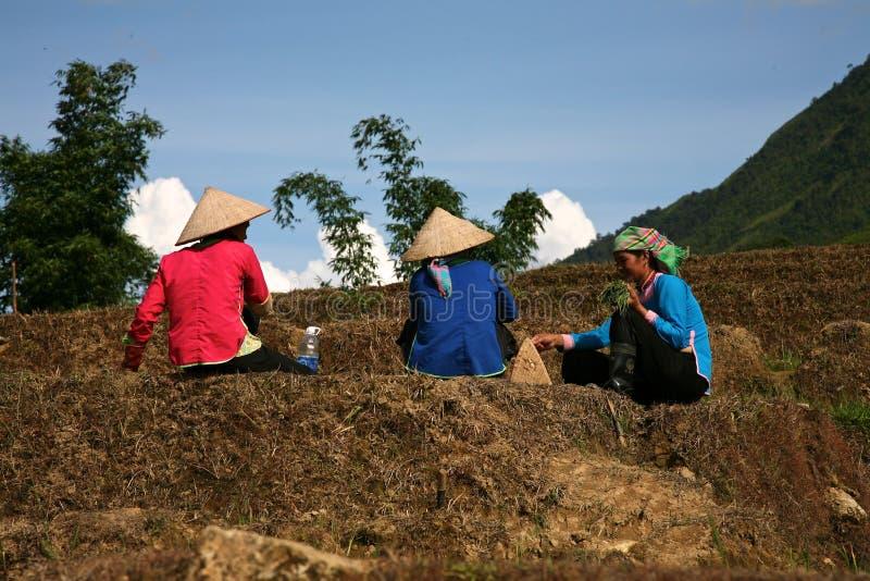 Farm Workers - Sapa Vietnam royalty free stock image