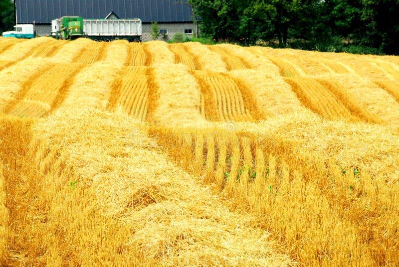 farma pola zbiorów zdjęcie royalty free