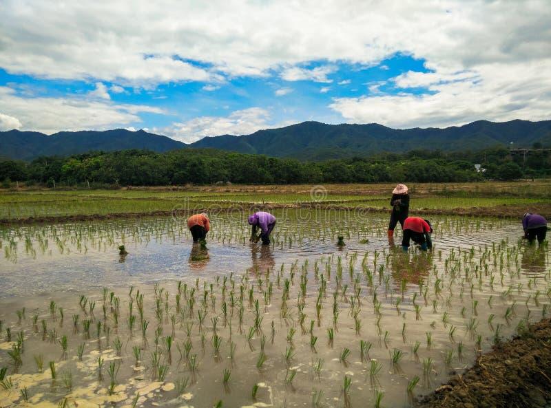 Farmar-Leben lizenzfreie stockfotografie