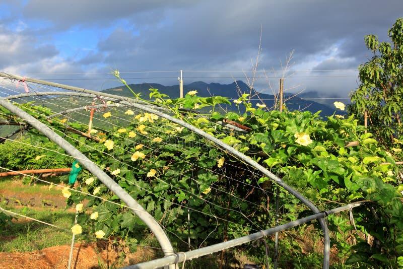 Farmer's garden royalty free stock images