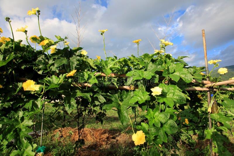Farmer's garden royalty free stock photography