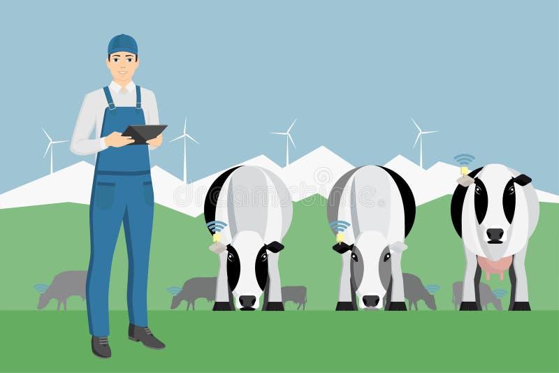 Farmer με την ψηφιακή ταμπλέτα σε μια βοσκή βοοειδών ελεύθερη απεικόνιση δικαιώματος