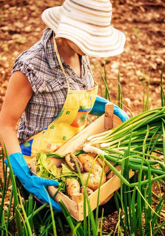 Farmer που λειτουργεί στον κήπο στοκ φωτογραφίες