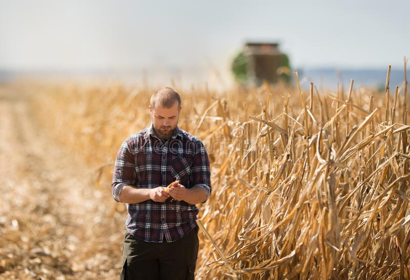 Farmer που εξετάζει τα σιτάρια καλαμποκιού στο ρυμουλκό τρακτέρ στοκ φωτογραφίες με δικαίωμα ελεύθερης χρήσης