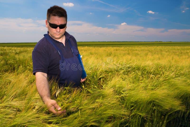 Farmer που επιθεωρεί το κριθάρι στοκ φωτογραφία με δικαίωμα ελεύθερης χρήσης