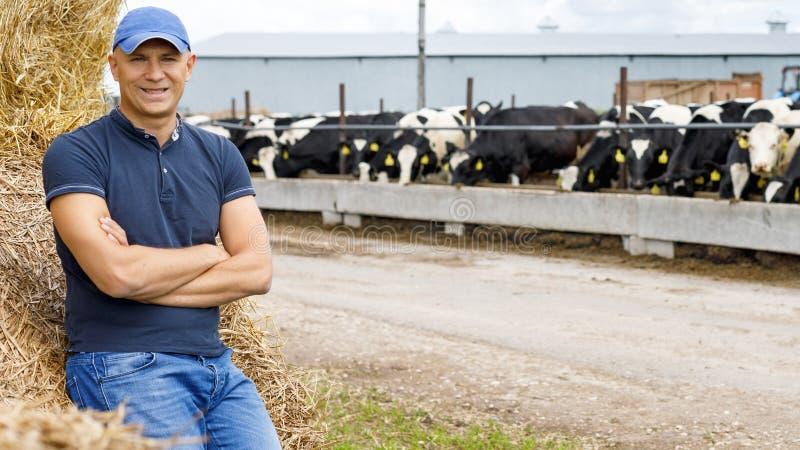 Farmer που λειτουργεί στο αγρόκτημα με τις γαλακτοκομικές αγελάδες στοκ φωτογραφία με δικαίωμα ελεύθερης χρήσης