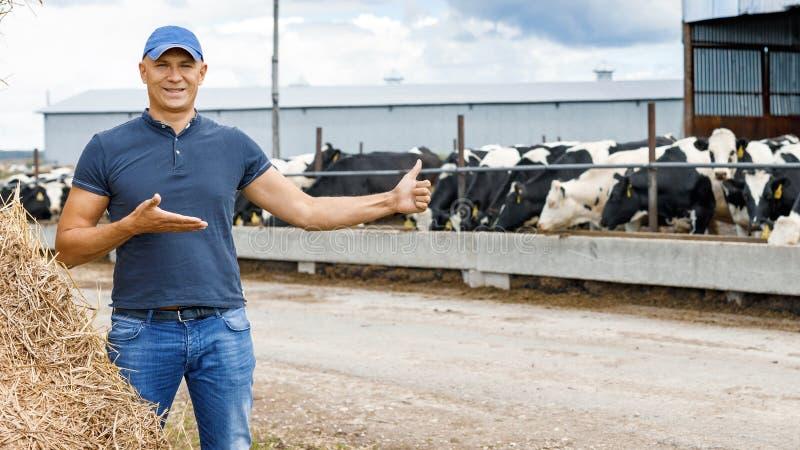 Farmer που λειτουργεί στο αγρόκτημα με τις γαλακτοκομικές αγελάδες στοκ φωτογραφία