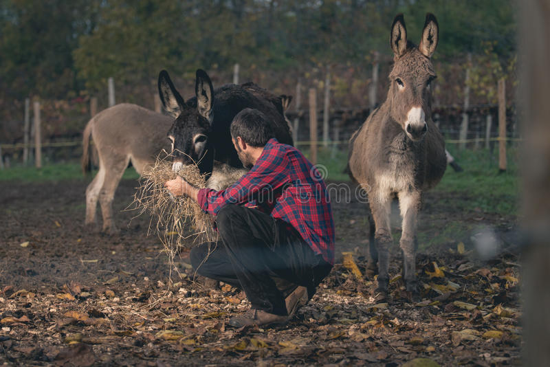 Farmer που φροντίζει το γάιδαρο υπαίθριο στοκ φωτογραφία με δικαίωμα ελεύθερης χρήσης
