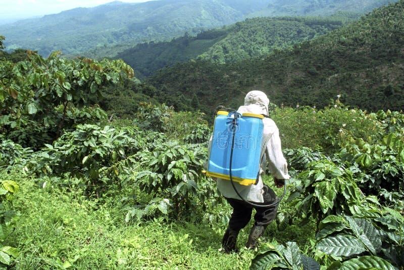 Farmer που ψεκάζει τις εγκαταστάσεις καφέ στο τοπίο βουνών στοκ εικόνα με δικαίωμα ελεύθερης χρήσης