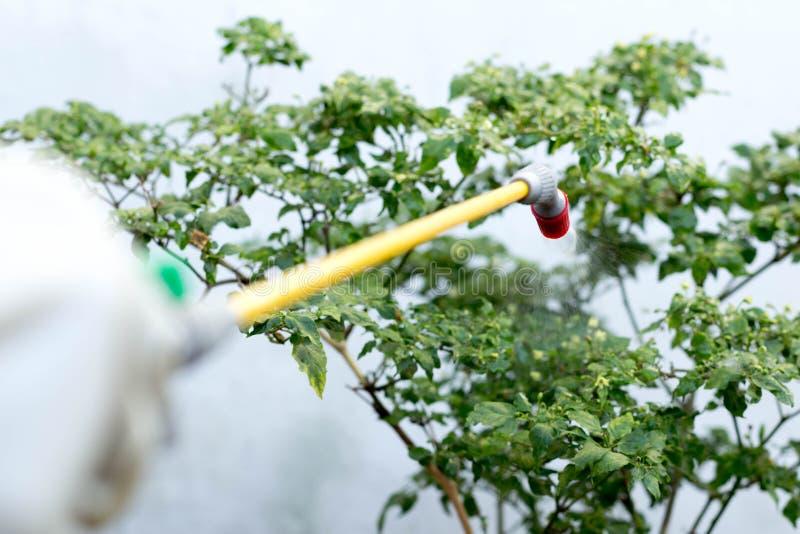Farmer που ψεκάζει το εντομοκτόνο στις εγκαταστάσεις τσίλι στοκ εικόνα με δικαίωμα ελεύθερης χρήσης