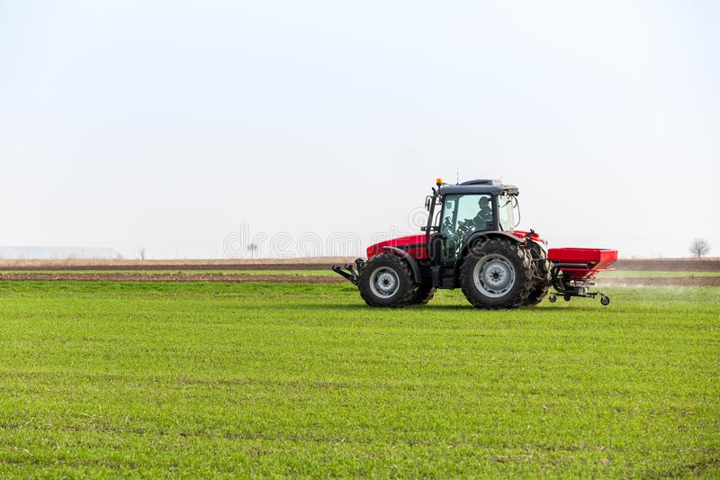 Farmer στον τομέα σίτου λίπανσης τρακτέρ στην άνοιξη με το npk στοκ φωτογραφία